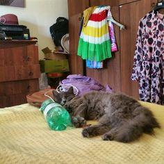 La vita comoda #cat #pelo #gatto #lamiapelosa