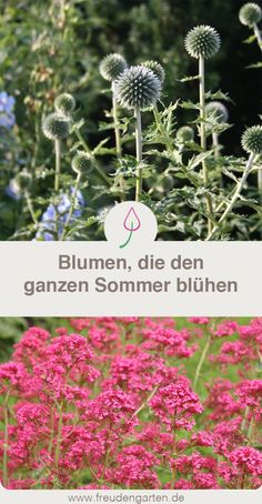 Blumen, Die Lange Blühen