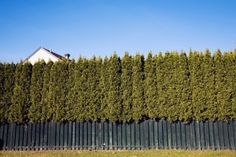 INEXPENSIVE FENCE IDEAS | one of the eco friendly and inexpensive privacy fence ideas that many ...