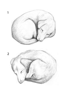 Sketches for dog carving