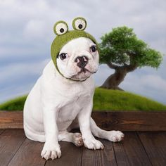 French Bulldog Puppy Costumes