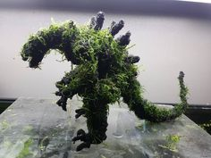 AquaBonsai   Godzilla Aquatic Moss piece- I love it!