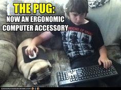 Pug Pad