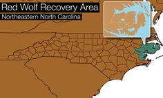 Image result for map of Eastern NC/red wolf
