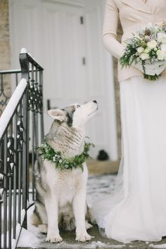 Husky in Winter Wedding | photography by http://jacquelynnphoto.com/