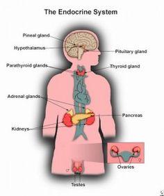 endocrine labeled
