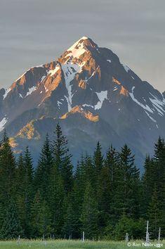 Aialik Bay, Kenai Fjords National Park, Alaska