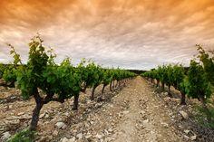 Castilla-La Mancha | La Mancha Gourmet Experience