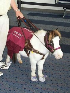 Seeing eye guide pony!  My daughter wants a pony when she is old enough for a service dog.