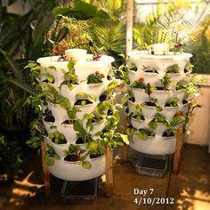 Jardim vertical permite plantar orgânicos em casa aproveitando suas sobras.