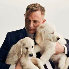 """barbarasangi from ; obgynekenobi: """"Because the world is shit right now, but at least I still have Daniel Craig as James Bond. Oh…and puppies. Craig Bond, Daniel Craig James Bond, Rachel Weisz, Daniel Graig, Best Bond, Z Cam, Charles Darwin, Raining Men, British Actors"""