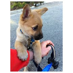 puppies puppies puppies! ❤ liked on Polyvore