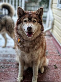 Majestic lady Bring Positive Vibes Change Your Life Forever. Best Dog Food, Best Dogs, Animals And Pets, Cute Animals, Dog Photography, Pet Accessories, Beautiful Dogs, Mans Best Friend, Dogs And Puppies