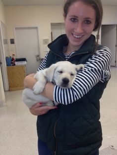 Guiding Eyes for the Blind puppy