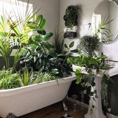 Who needs a bath anyway? @artynads makes better use of the space #obusloves #greenthumb