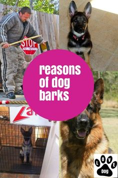 What You Ought To Know About Dog Barking #dogbarking Stop Dog Barking, Love Pet, Pets, Animals, Animales, Animaux, Animal, Animais, Animals And Pets