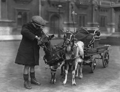 #goatvet loves this Goat Cart Photograph  - Goat Cart Fine Art Print