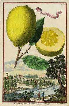 Where Five Valleys Meet: In praise of the lemon♥