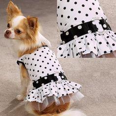 Zack and Zoey Contrasting Dots Sundress - Size: XS - Style: Polka Dot ** Unbelievable  item right here! (This is an amazon affiliate link. I may earn commission from it)