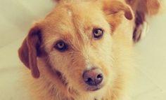 Un perro le salvó la vida a un niño recién nacido