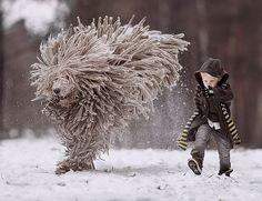 Seliverstoff, Andy - Boy & Komondor, St Petersburg, II (series- large dogs, small kids)