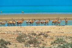 Dahlak Kebir Island (in the Red Sea), Eritrea.