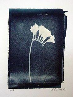 Karl Burke Cyanotype, Flower 8