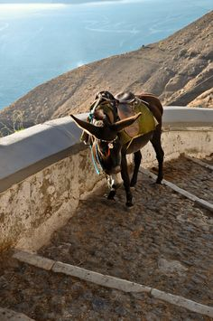 Little Mule, Fira Caldera, Santorini my husband and I did these stairs be foot !!! 587 steps each way !!! But so worth it !!!