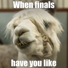 Stay strong, Rams. Four more days until summer break.