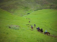 The Semonkong Pony Trail guides you through the beautiful terrain of Lesotho on the back of a rugged Basotho pony.