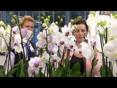 Je wil een orchidee, maar weet niet hoe je die schitterende bloem moet verzorgen? Met onze tips hou je je plant in topvorm! Christmas Ad, Christmas Cocktails, Holiday Cocktails, Christmas Cookies, Pinterest Photos, Pinterest Blog, Cranberry Champagne Cocktail, Crescent Cookies