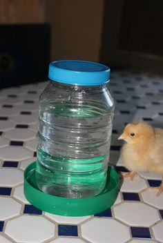Off the Grid at -30: Frugal Tuesday - A Quick DIY Chick Feeder/Waterer