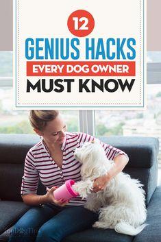 Useful Dog Obedience Training Tips – Dog Training Dog Training Classes, Training Your Dog, Training Tips, Training Quotes, Dog Hacks, Old Dogs, New Tricks, Dog Care, Money Saving Tips