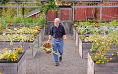 High + Mighty Raised Beds- bringing the soil up to counter height, you make tasks like weeding and harvesting simpler. Great if you have decreased mobility!