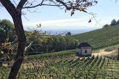 Vineyards surrounding the chapel of St Wendelin on Day 2