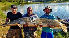 Жесть Вот это рыба Рыбаки в шоке Неудачи на рыбалке Рыба мечты Приколы н...