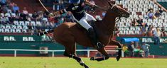 Polo is a sport of great presence in Argentina, but much more unknown in other countries of the world and in the region. Other Countries, Countries Of The World, Horse Training, Polo, History, Sports, Argentina, Hs Sports, Polos