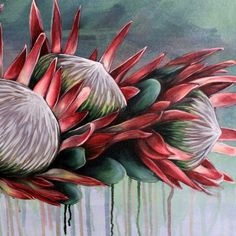 Protea Art, Protea Flower, Cactus E Suculentas, Acrylic Art, Botanical Art, Art Pictures, Flower Art, Watercolor Art, Art Drawings