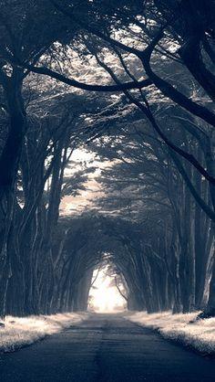 Sigue el camino, al final encontrarás el mejor regalo