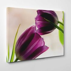 Canvasprints.io | Two Purple Tulips - #canvasprintsio - Low cost, high quality canvas prints made in London UK from just £13.99. You're sure to find inspiration in our collection. Ask about our photo to canvas option too, it's super simple. Canvas prints on wall / flower and floral canvas art