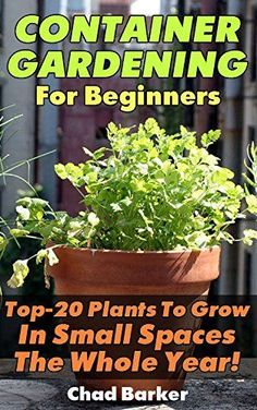 Container Gardening For Beginners: Top 20 Plants To Grow In Small Spaces  The Whole