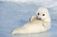 Seal pup beach side looking too cute for words.