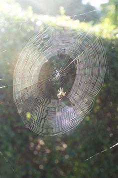 spinnenwebben in de herfst