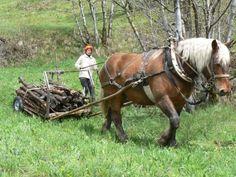nouveau harnais en traits et brancards - Le cheval de Travail