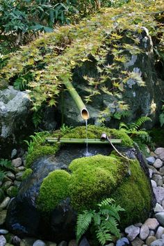 Amazing Moss Covered Natural Shaped Tsukubai つくばい