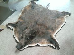 What's better than a wild boar rug? A wild boar rug with hooves! Hog Hunting, Hunting Cabin, Hunting Stuff, Taxidermy Display, Deer Mounts, Deer Camp, Trophy Rooms, Secret Box, Wild Boar