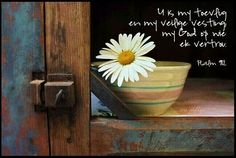 Chippy blue paint, old bowl, and a daisy . So pretty and so country Happy Flowers, Simple Flowers, Wild Flowers, Beautiful Flowers, The Nearness Of You, Daisy Hill, Driving Miss Daisy, Sunflowers And Daisies, Daisy Love
