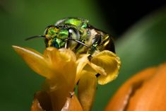 """Eco-Friendly Flora Protect Our Fauna- """"Bee"""" Kind to Vital Insects - The Howler Magazine Living In Costa Rica, Flower Landscape, Costa Rica Travel, Water Conservation, Water Plants, Green Building, Irrigation, Building Design, Central America"""