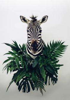 "Saatchi Art Artist Anna Church; Zebra Photography, ""Botanist (large) #5 of 10"" #art"