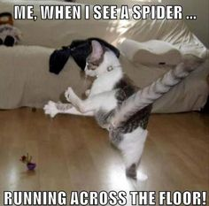 cool Funny Animal Pictures Of The Day – 21 Pics | - Daily Lol Pics by http://www.dezdemonhumor.space/animal-humor/funny-animal-pictures-of-the-day-21-pics-daily-lol-pics/